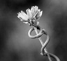 Entwined by Zach Pezzillo