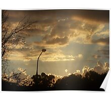 Front Yard Sunset  Poster