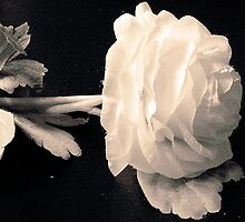 Purity by Rachel Williams