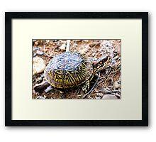 North American Box Turtle #2 Framed Print