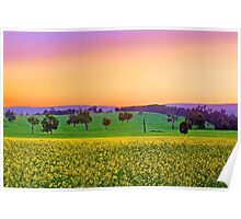Canola Farm At Dawn Poster