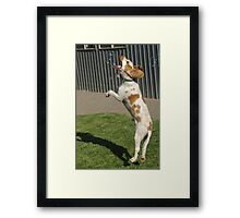 Timmy likes catching soap bubbles Framed Print