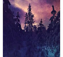 Purple coloured forest Photographic Print