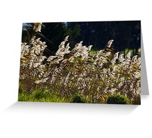 Winds gentle influence Greeting Card
