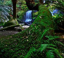 Snaking Tree Fern by Stephen Ruane