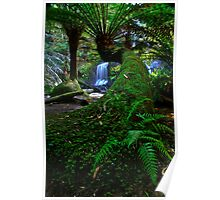 Snaking Tree Fern Poster