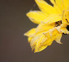 Frozen flower by WET-photo