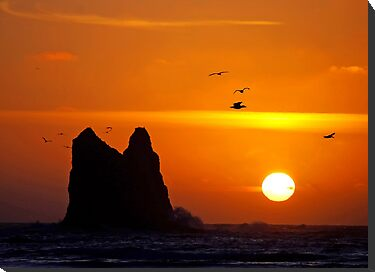 sunset activity at 'the notch', la push, washington, usa by dedmanshootn