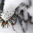 Prickly Snow by debbiedoda