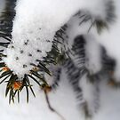 Prickly Snow by debbiedoda