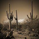 Three Cactus by Aaron Bottjen