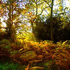 Ferns by AlanPee
