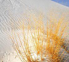 Golden Grass by Aaron Bottjen