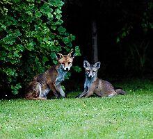 Fox with Cub at Dusk by Crispel