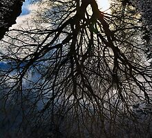 Puddle Reflections by embracelife