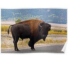 Wandering Yellowstone Bison Poster