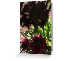 Little flower BIG SHADOWS Greeting Card