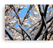 tree with snow Canvas Print