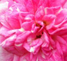 Pink Delight Sticker