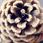 pinecone  by ARIANA1985