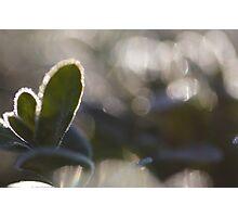 Green Bokeh Photographic Print
