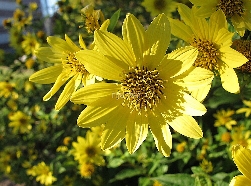 Golden Yellow by njumer