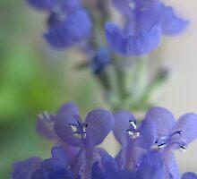 Purple Fusion by MarianBendeth