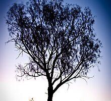 Moon above tree - Uluru by Rob McDougall