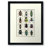 Jeweled Beetles Framed Print