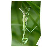 Birth of a Mantis Poster