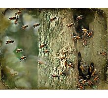 """""""Killer Bees ,that what Got 'im ...."""" Photographic Print"""