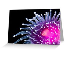Magneta Jewel Anemone Greeting Card