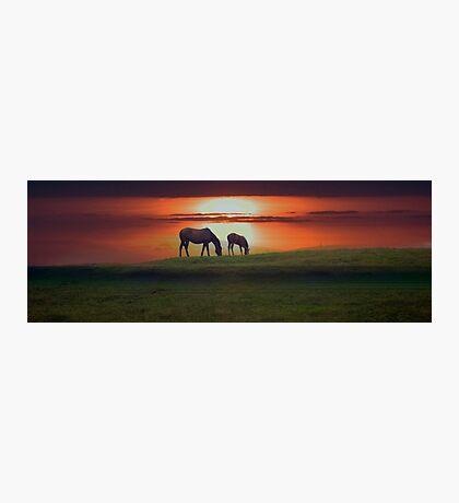 Sunset horses Photographic Print