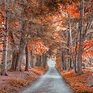 Autumn's Lane by Donnie Voelker