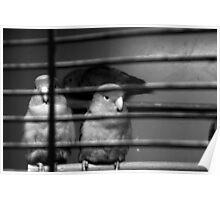 Pet Shop Boys Poster