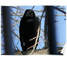 Grackle Waits Poster