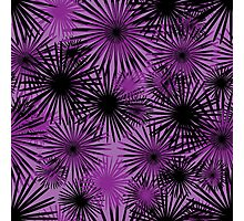 black and purple firecracker floral Photographic Print