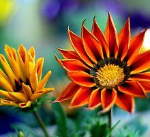 Sunny.... by Mary Trebilco