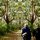 Bushwalk by Jennifer Eurell
