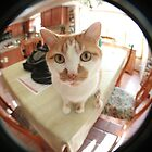gizmo, fisheyed by iannarinoimages