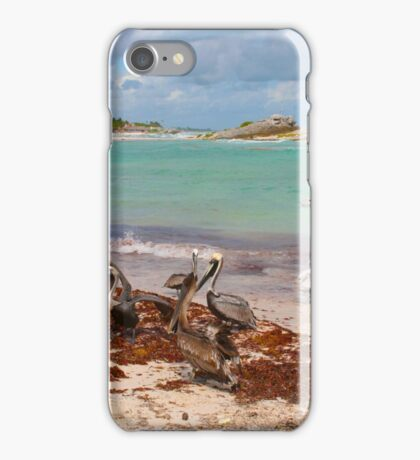 Guy feeding pelicans in Tulum Beach, MEXICO iPhone Case/Skin