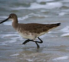 Sandpiper on the run!!!!! by Brenda Dow