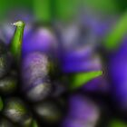 Ginger Plant 2 by Fine Art Photography by Paul Hamilton