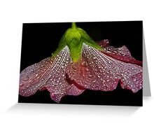 pink hollyhock skirt Greeting Card
