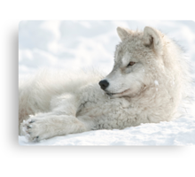 Chillin Out Canvas Print