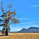 Cazneaux Tree, Wilpena, Flinders Ranges NP. SA. by johnrf