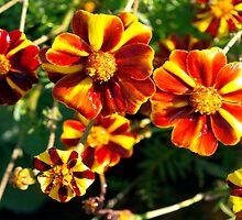 Like little pinwheels by ♥⊱ B. Randi Bailey