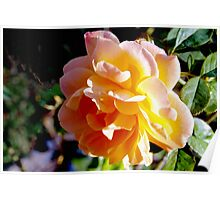 Sunrise within a rose Poster