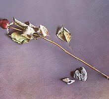 Forgotten Love by Elena Kolotusha