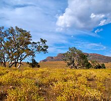 Wilpena, Flinders Ranges National Park, SA. by johnrf